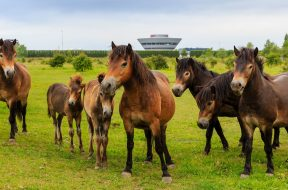 porsche-leipzig-porsche-safari-horses