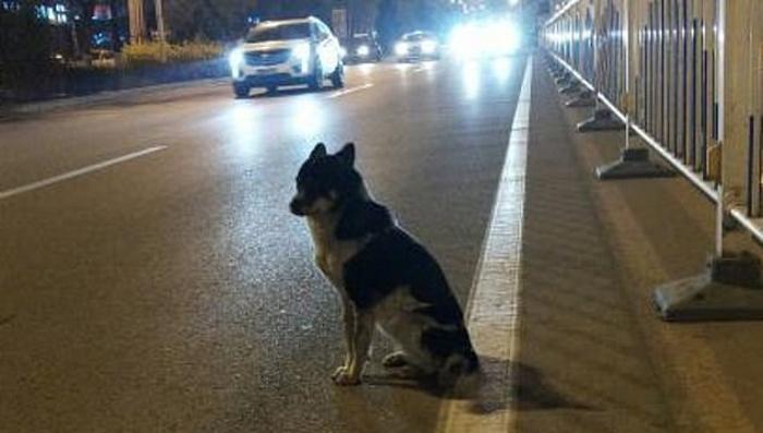 Pas 80 dana čekao vlasnika na mestu gde je ovaj poginuo u saobraćajnoj nesreći (VIDEO)