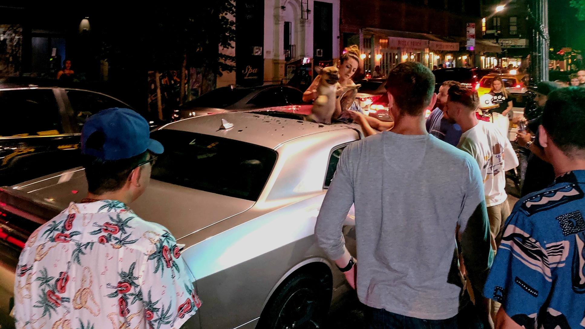 Francuski buldog pao sa šestog sprata na Dodge Challenger i preživeo