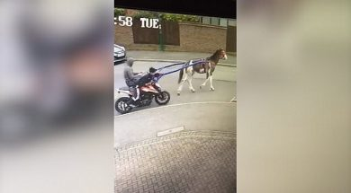 thieves-steal-ktm-bike-in-most-unusual-fashion-with-help-from-a-horse-137393_1